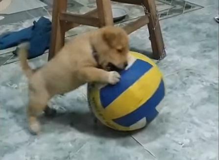 Boss thích chơi đá banh